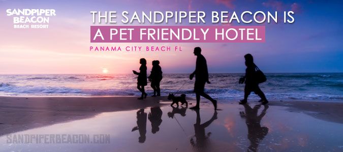 Pet friendly hotels in Panama City Beach